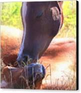 Arabian Foals - Peaceful Canvas Print by ELA-EquusArt