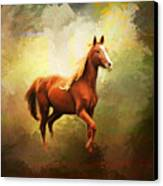 Arabian Horse Canvas Print by Jai Johnson