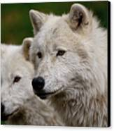 Arctic Wolf Pair Canvas Print by Michael Cummings