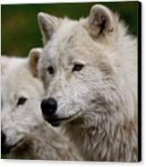 Arctic Wolf Pair Canvas Print by Michael Cummings