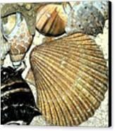 Art Shell 2 Canvas Print by Stephanie Troxell
