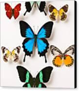 Assorted Butterflies Canvas Print by Garry Gay