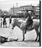 Atlantic City: Donkey Canvas Print by Granger