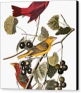 Audubon: Tanager Canvas Print by Granger