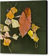 Autumn 1 Canvas Print by Kenton Smith