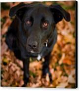 Autumn Dog Canvas Print by Adam Romanowicz
