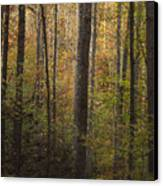 Autumn In The Woods Canvas Print by Andrew Soundarajan