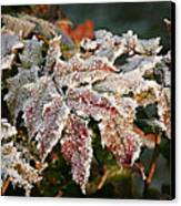 Autumn Leaves In A Frozen Winter World Canvas Print by Christine Till