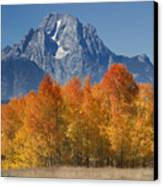 Autumn Splendor In Grand Teton Canvas Print by Sandra Bronstein