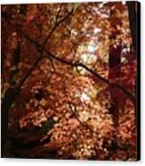 Autumn Sunshine Poster Canvas Print by Carol Groenen