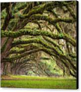 Avenue Of Oaks - Charleston Sc Plantation Live Oak Trees Forest Landscape Canvas Print by Dave Allen