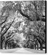 Avenue Of Oaks Charleston South Carolina Canvas Print by Stephanie McDowell