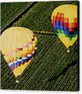 Balloons Over Napa Valley Canvas Print by Cindy Lee Longhini