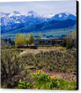 Balsamroot Flowers And North Cascade Mountains Canvas Print by Omaste Witkowski