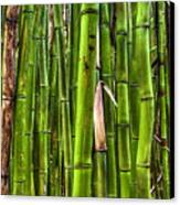 Bamboo Canvas Print by Dustin K Ryan