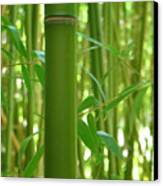 Bamboo Canvas Print by Rhianna Wurman