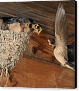 Barn Swallows At Nest Canvas Print by Scott  Linstead