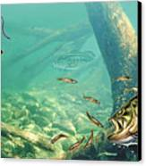 Bass Lake Canvas Print by JQ Licensing