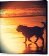 Beach Dog Canvas Print by Paul Topp