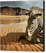 Beach Zebra Canvas Print by Carlos Caetano