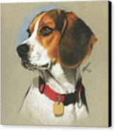 Beagle Canvas Print by Marshall Robinson