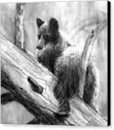 Bear Bottom Canvas Print by Paul Sachtleben
