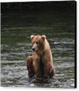 Bear Sitting On Water Canvas Print by Tracey Hunnewell