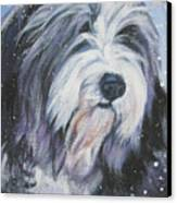 Bearded Collie In Snow Canvas Print by Lee Ann Shepard