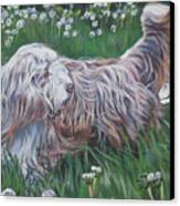 Bearded Collie Canvas Print by Lee Ann Shepard