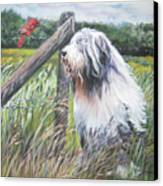 Bearded Collie With Cardinal Canvas Print by Lee Ann Shepard