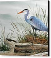 Beautiful Heron Shore Canvas Print by James Williamson