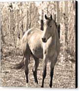 Beautiful Horse In Sepia Canvas Print by James BO  Insogna