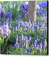 Beautiful Spring Day Canvas Print by Carol Groenen