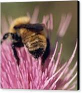 Bee On Thistle 102 Canvas Print by Diane Backs-Mancuso