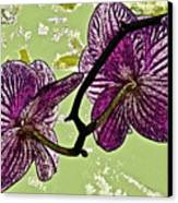 Behind The Orchids Canvas Print by Gwyn Newcombe
