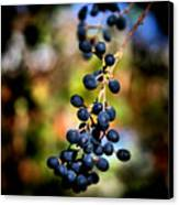 Berry Cold Out Canvas Print by Karen M Scovill