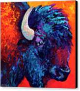 Bison Head Color Study II Canvas Print by Marion Rose