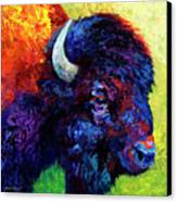 Bison Head Color Study IIi Canvas Print by Marion Rose