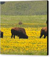 Bison Herd Canvas Print by Alan Lenk