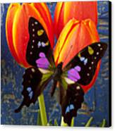 Black And Pink Butterfly Canvas Print by Garry Gay