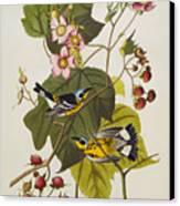 Black And Yellow Warbler Canvas Print by John James Audubon