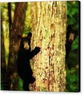 Black Bear Cubs Canvas Print by Gray  Artus