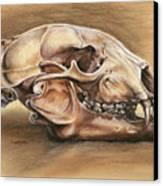 Black Bear Skull Canvas Print by Darlene Watters