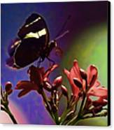 Black Butterfly With Oil Effect Canvas Print by Tom Prendergast
