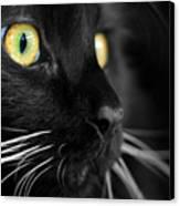 Black Cat 2 Canvas Print by Craig Incardone