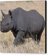 Black Rhino On The Masai Mara Canvas Print by Sandra Bronstein