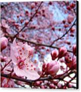Blossoms Art Blue Sky Spring Tree Blossoms Pink Giclee Baslee Troutman Canvas Print by Baslee Troutman
