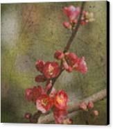 Blossoms Canvas Print by Rebecca Cozart