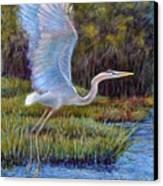 Blue Heron In Flight Canvas Print by Susan Jenkins
