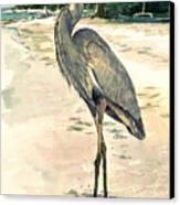 Blue Heron On Shell Beach Canvas Print by Shawn McLoughlin